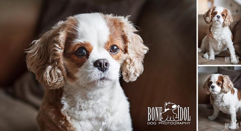 South London Dog Portraits